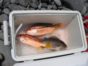 午前中の釣果